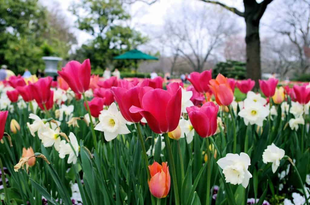 Dallas Arboretum and Botanic Garden