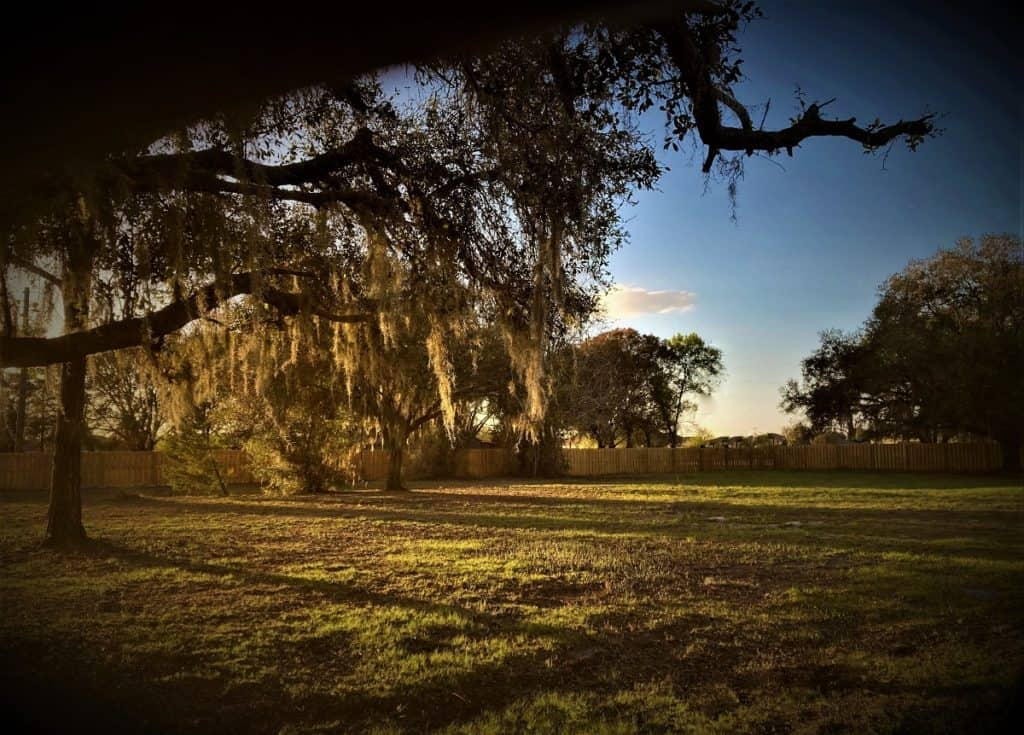 Tree Filled, Breezy Outdoor Greenspace tampa rental