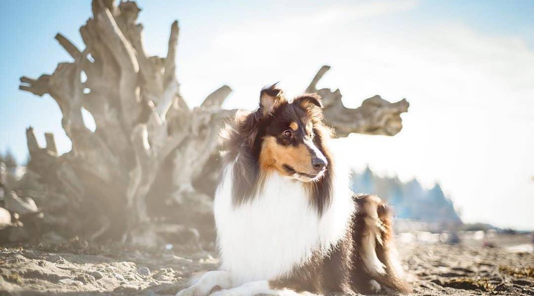 best seattle pet photographers
