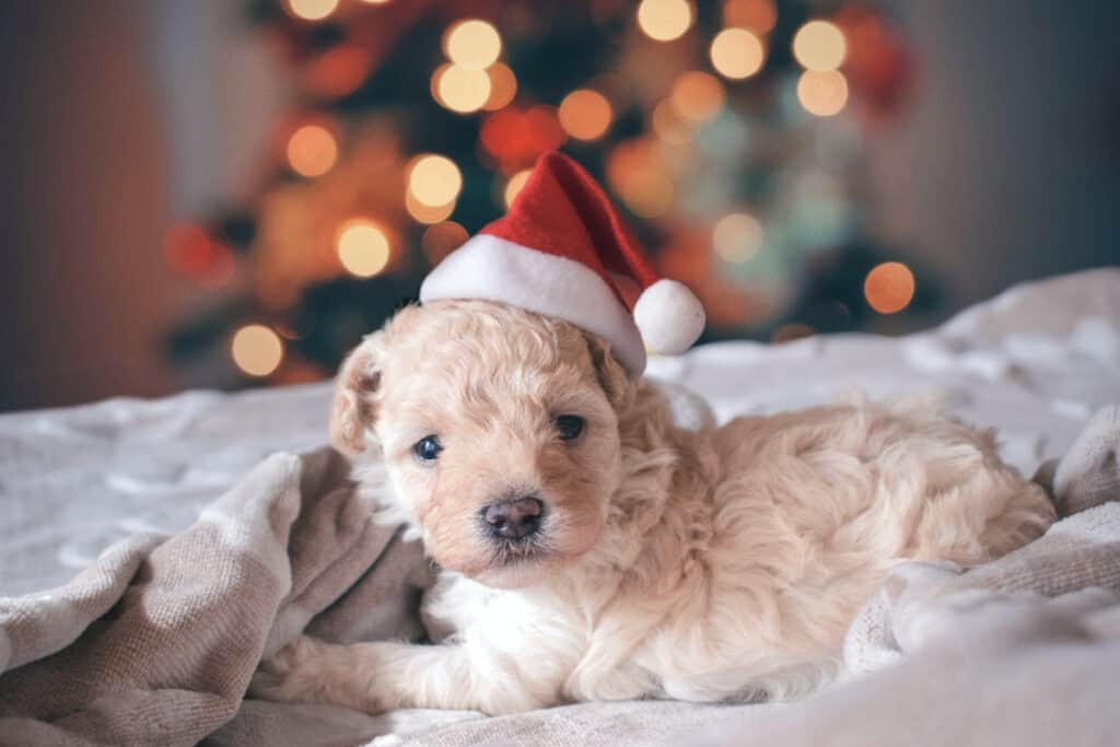 dog with christmas tree in background