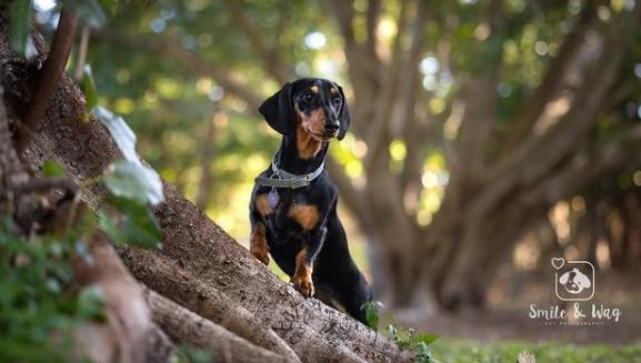top brisbane pet photogs lead image