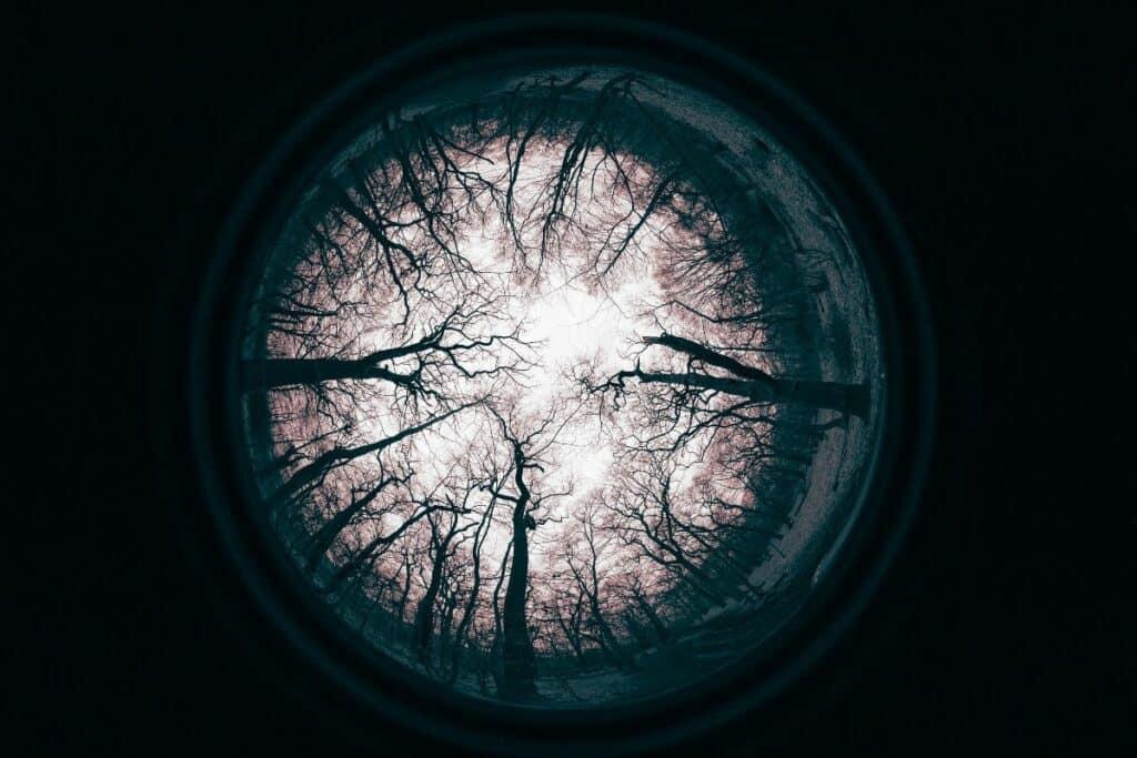 fisheye lens from bottom of forest