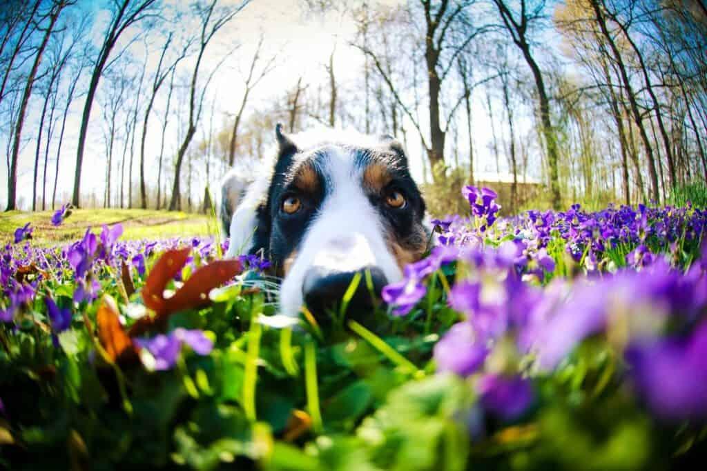 dog in field of flowers