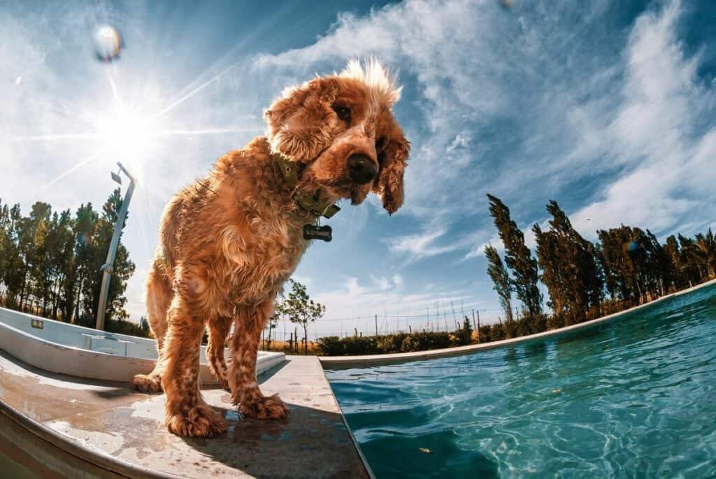 a poolside dog through fisheye lens