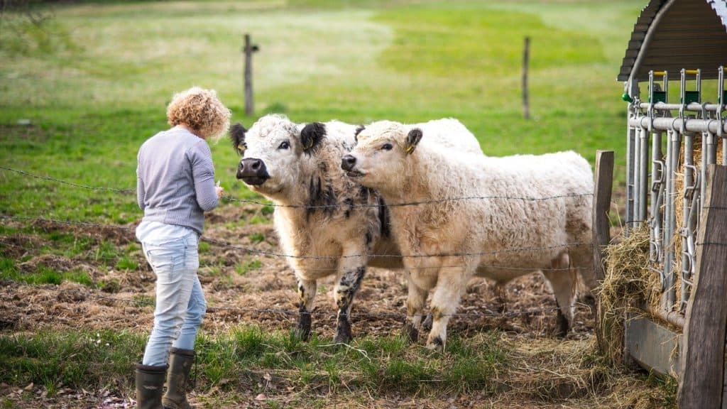 woman on ranch with cows