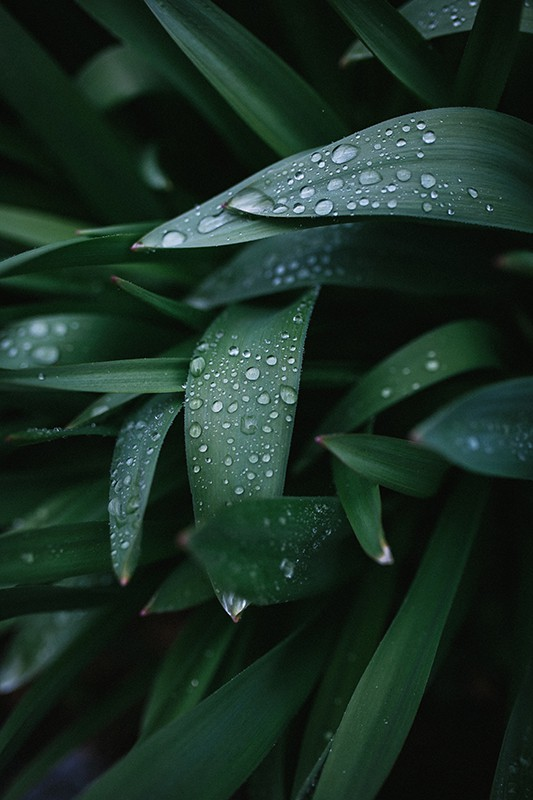 Plant leaves with raindrops on them