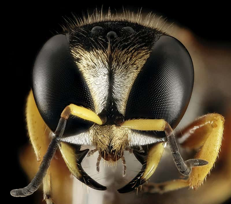 bee micro photography